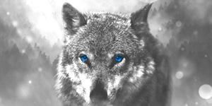 wolf-impressum-neu